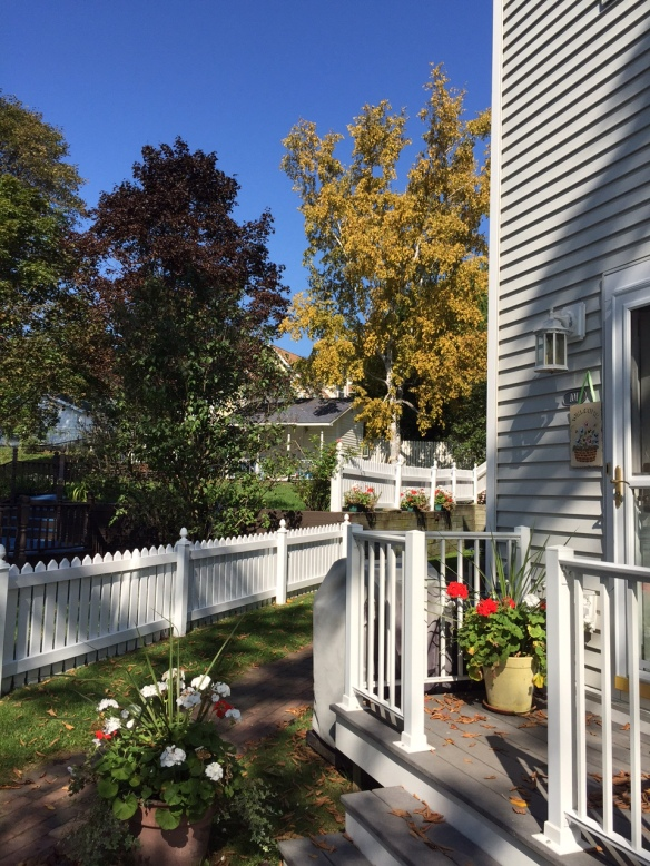 We only have to step outside into the yard to see the island beginning to dress for Fall. We'll miss all the glory of Mackinac fully dressed in all her splendor this year, so I'll be relying on the photographs of others to