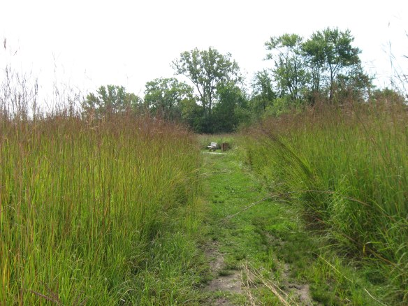 Anne lives in Champaign IL, which is near this wonderful spot, Meadowbrook Park. Much of the park is restored prairie and the bluestem prairiegrass is six feet tall.