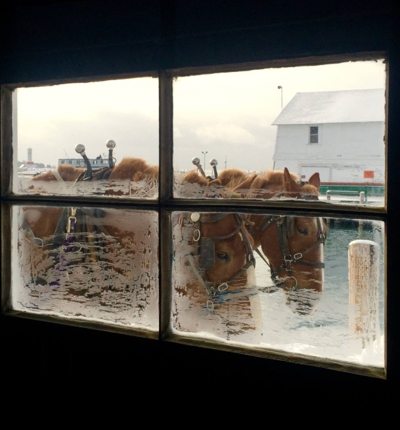 From Bobby Lee: People have been looking out these same windows on the dock for almost 125 years, and more times than not, horses have been just outside when they've checked.