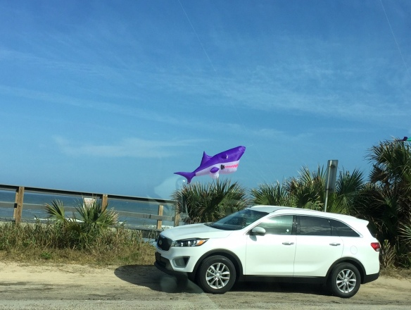 It's amazing what you'll see out your car window in Flagler Beach near the pier!