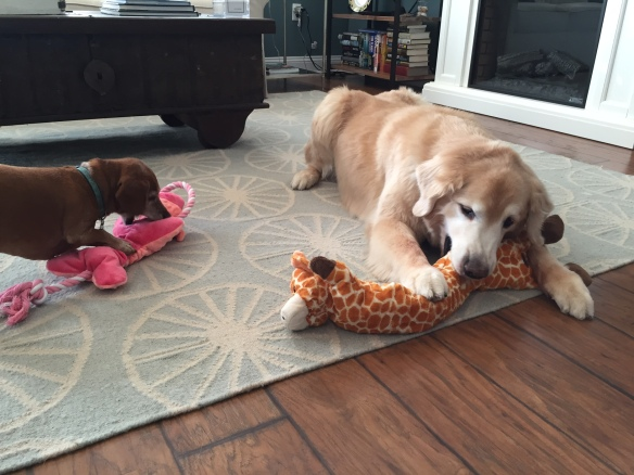 It's been an hour since I took this photo, and Maddie has already destroyed her pink hippopotamus and is working on pulling the stuffing out of Bear's giraffe.