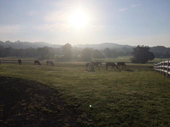 Traci is from Tennessee - Pulaski to be exact. She captured this wonderful photo early one morning on their farm. Ahhhh . . . peace.