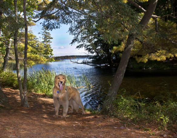 This is beautiful Hamlin Lake in Ludington MI, home for Kathie (and Golden Retriever Oliver).
