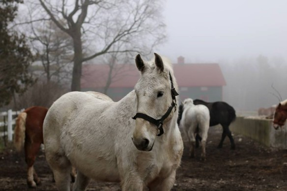 Horses in the fog up near the Grand Stables. (Photo: Joseph Herscher)