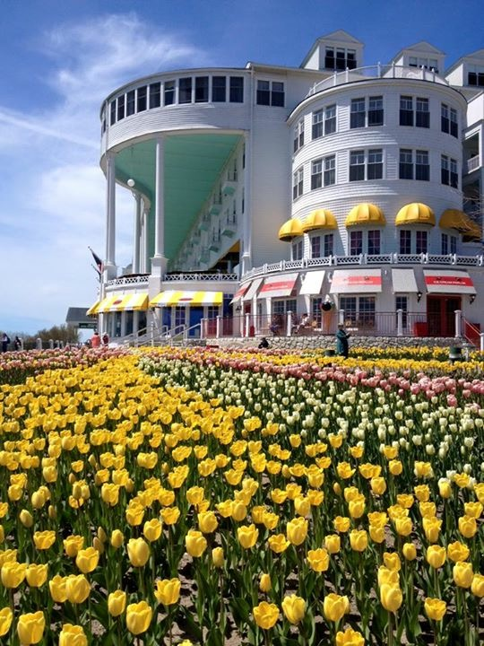 A sure sign of spring on Mackinac - the tulips at Grand Hotel are up and glorious! (Photo: Orietta Barquero)