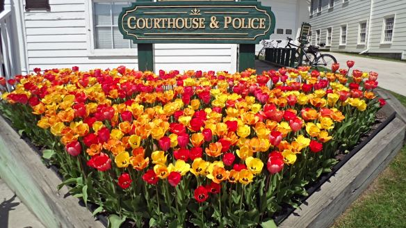 But the Grand's not the only one with bragging rights with the tulips!