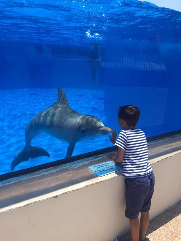 Alex had a blast meeting the dolphins at Marineland (he even got to feed the dolphins and learned how to ask them to do tricks) . . .
