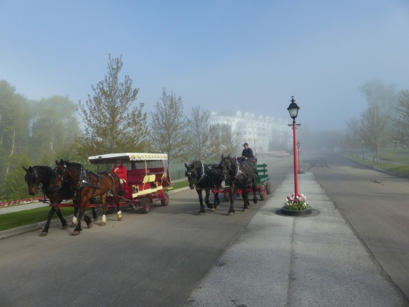 Weather has been very random the last couple of weeks. Even in the fog though, the island is beautiful, and the activities that define the island - like drays and taxis - never change.