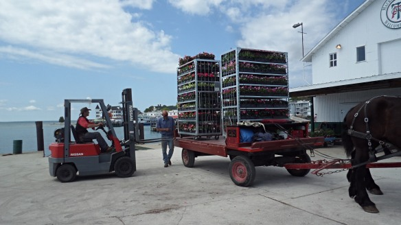 All those plants have to come from somewhere! They arrive by ferry, are transferred to drays, and then they make their way to the businesses or homes of Mackinac. (Photo: Jill Sawatzki