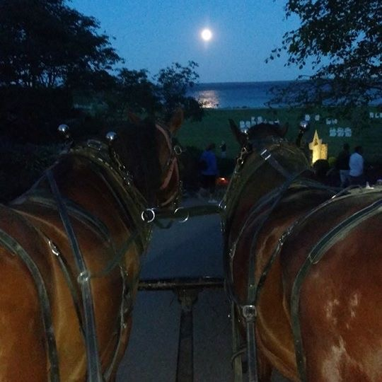 A dreamy shot from one of our favorite taxi drivers - Jim Gillespie. He had stopped to rest his horses a moment at Mission Point and took this great photo.