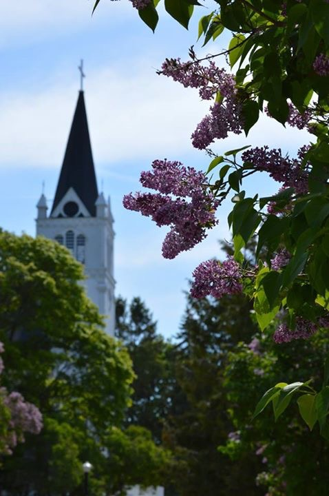 Friends and readers who are there are reporting the lilacs are FANTASTIC this year! I loved this photo shared by friend Misty Martinchek.