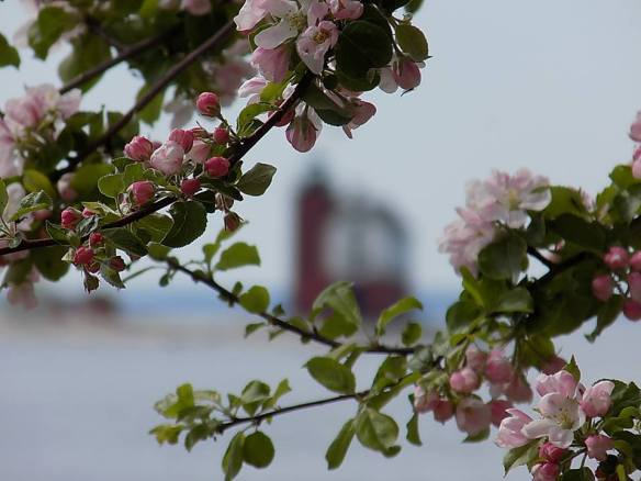 And whether you see them from afar or from up close, once you've experienced Mackinac during lilac season, you will always want to return at the same time the next year - and the next. (Photo: Tom Chambers)