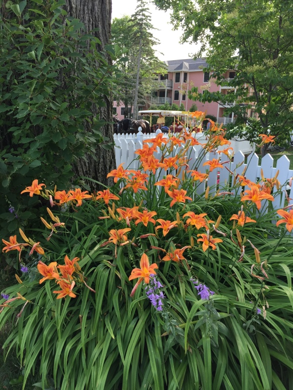 Beautiful beds of day lilies are everywhere. These are in the yard of the condo where we're staying.