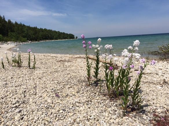 Wildflowers on a shoreline beach.