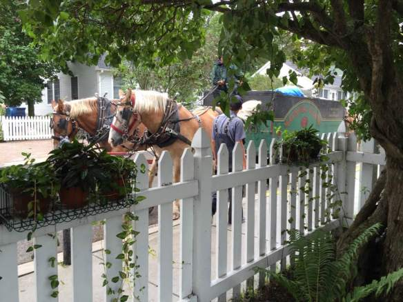"""When we got back to Park Place Suites, Tessa and I were sitting in our courtyard and the 'garbagemen' came in a horse drawn dray! I do love this place!"""