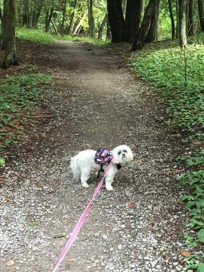 """I loved our walk so much that I immediately went a second time showing it to Tessa!"""