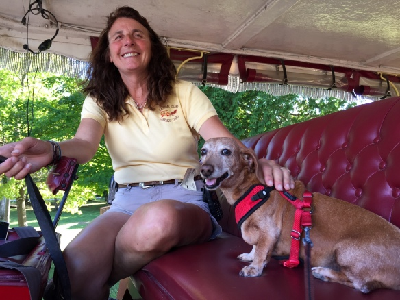 . . . . sitting on the drivers' seat of a Carriage Tour buggy!