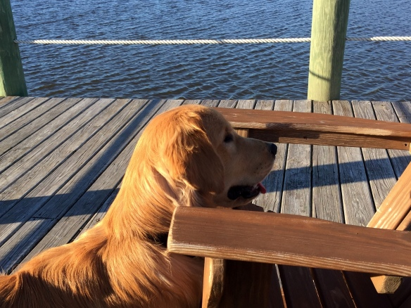 He loves walking out to the dock on the Intracoastal and watching birds.