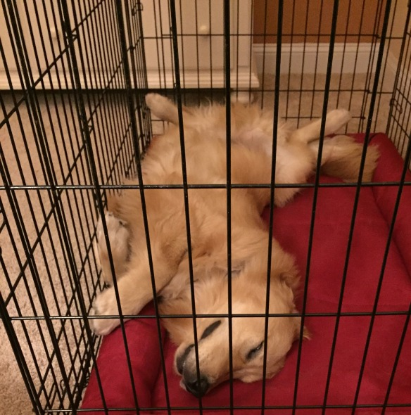 How Bodie sleeps at night. Cracks me up!