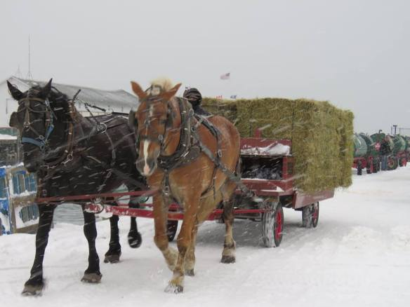 Those hard working horses have to eat. A hay wagon heads for the barn after loading at the ferry dock.