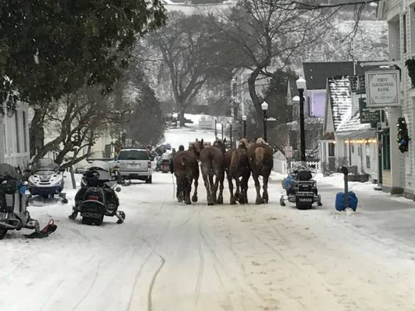 Horses brought to the island to handle the extra holiday business are led down Market Street toward the ferry docks. They will return to their winter home in Pickford.
